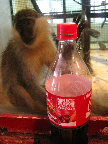 Monkey and Coke bottle